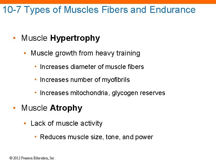 10 -7 Types of Muscles Fibers and Endurance • Muscle Hypertrophy • Muscle growth