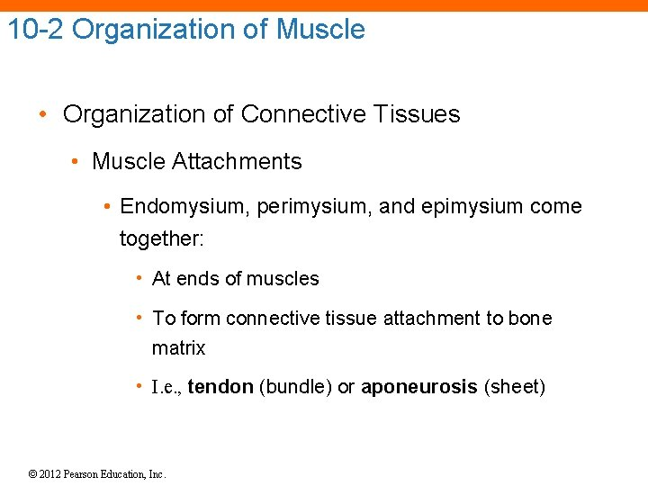 10 -2 Organization of Muscle • Organization of Connective Tissues • Muscle Attachments •