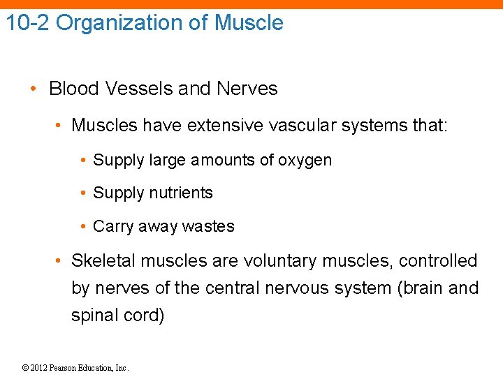 10 -2 Organization of Muscle • Blood Vessels and Nerves • Muscles have extensive