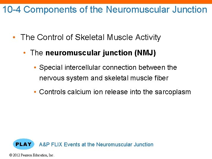 10 -4 Components of the Neuromuscular Junction • The Control of Skeletal Muscle Activity