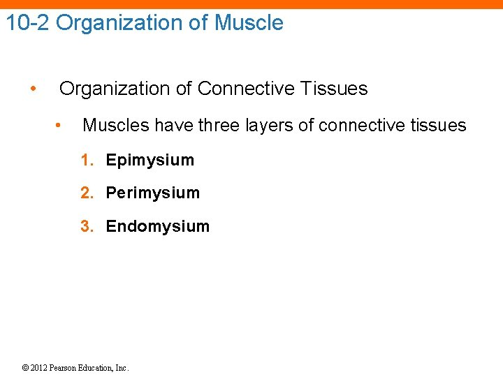 10 -2 Organization of Muscle • Organization of Connective Tissues • Muscles have three