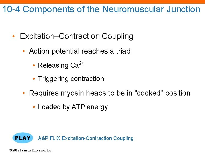 10 -4 Components of the Neuromuscular Junction • Excitation–Contraction Coupling • Action potential reaches