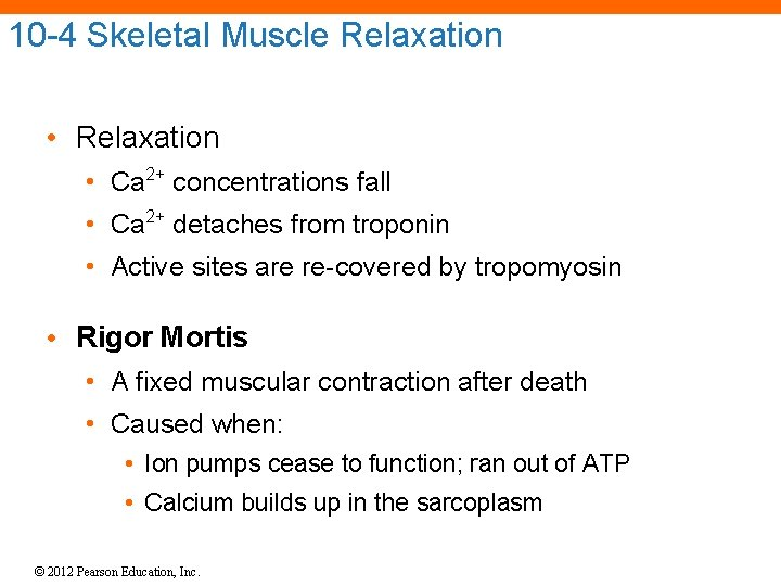 10 -4 Skeletal Muscle Relaxation • Ca 2+ concentrations fall • Ca 2+ detaches