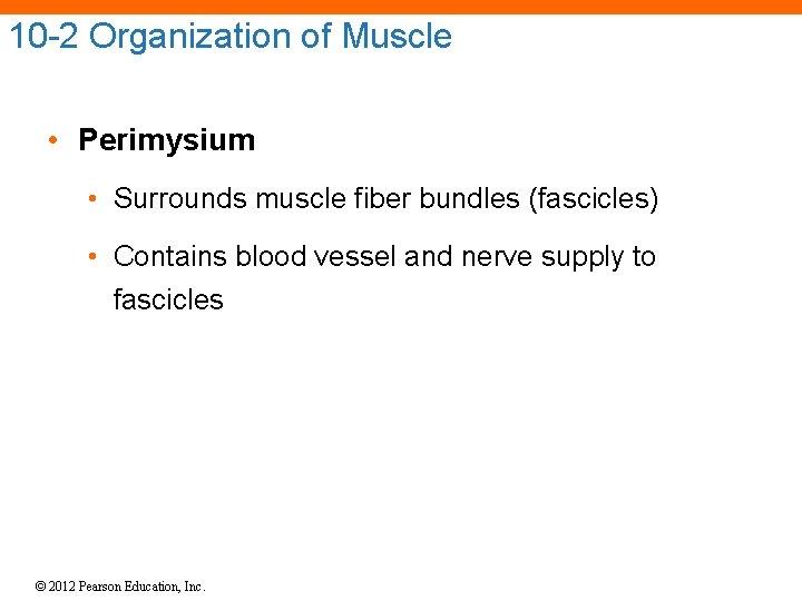 10 -2 Organization of Muscle • Perimysium • Surrounds muscle fiber bundles (fascicles) •