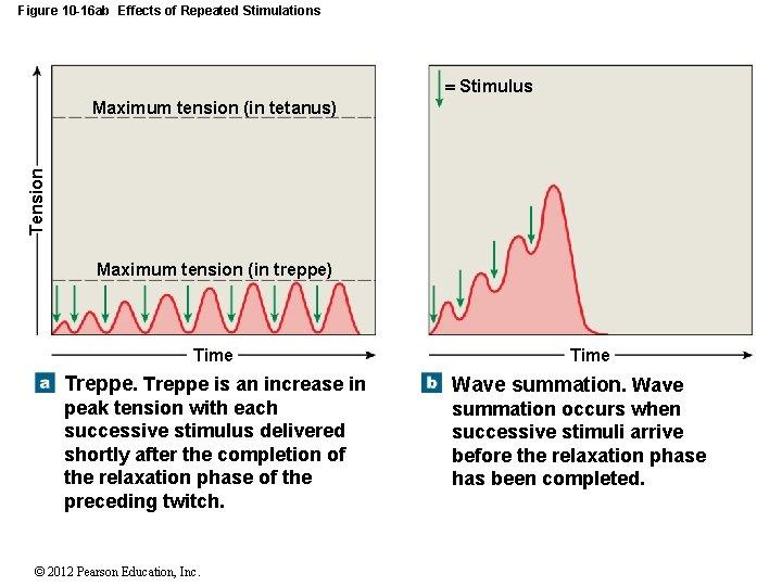 Figure 10 -16 ab Effects of Repeated Stimulations Stimulus Tension Maximum tension (in tetanus)