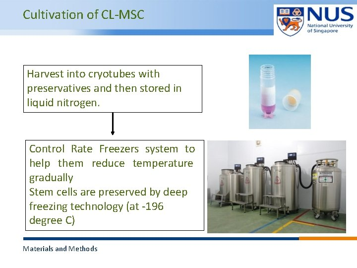Cultivation of CL-MSC Harvest into cryotubes with preservatives and then stored in liquid nitrogen.