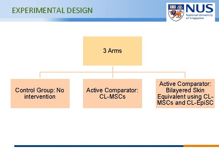 EXPERIMENTAL DESIGN 3 Arms Control Group: No intervention Active Comparator: CL-MSCs © Copyright National