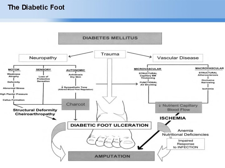 The Diabetic Foot Page ▪ 4