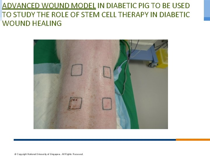 ADVANCED WOUND MODEL IN DIABETIC PIG TO BE USED TO STUDY THE ROLE OF