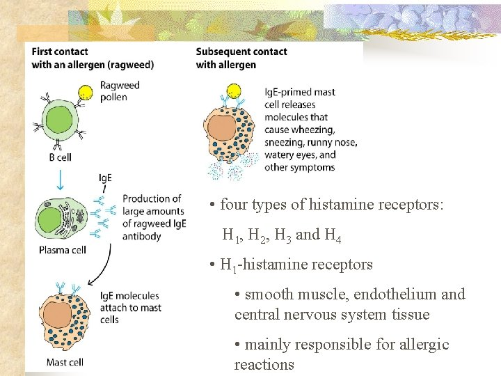 • four types of histamine receptors: H 1, H 2, H 3 and