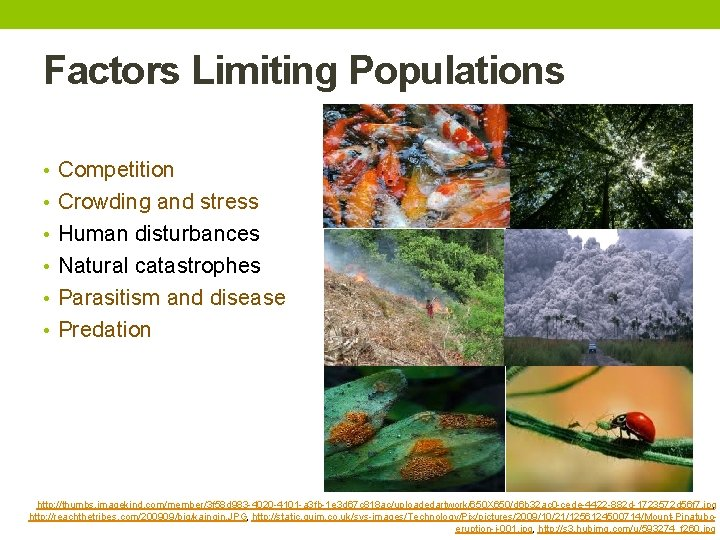 Factors Limiting Populations • Competition • Crowding and stress • Human disturbances • Natural