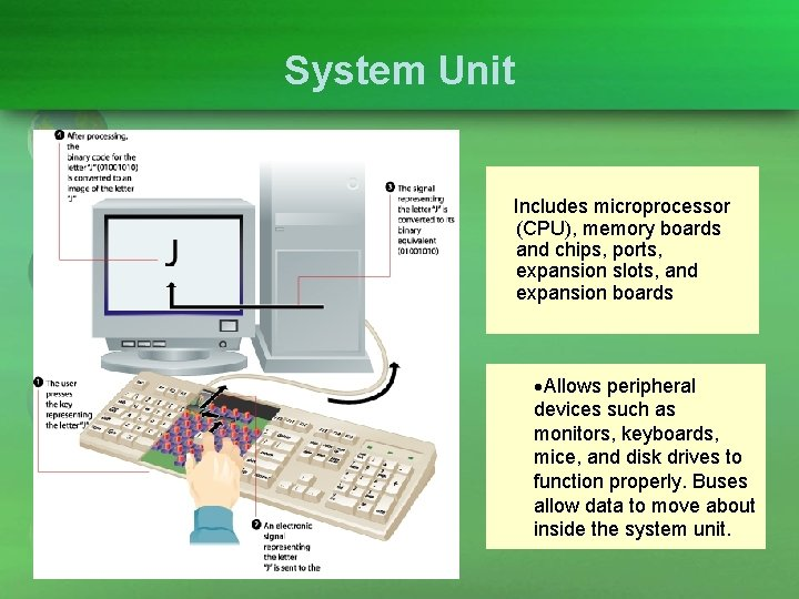System Unit Includes microprocessor (CPU), memory boards and chips, ports, expansion slots, and expansion