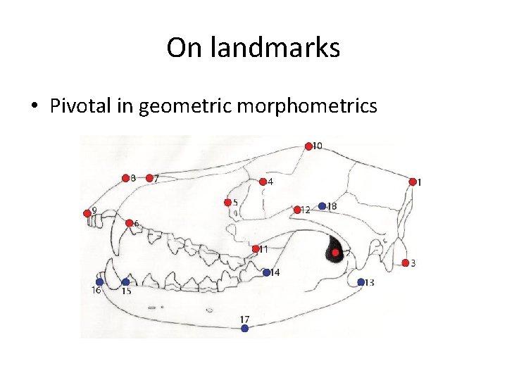 On landmarks • Pivotal in geometric morphometrics