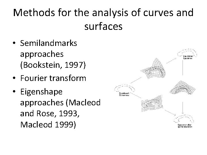 Methods for the analysis of curves and surfaces • Semilandmarks approaches (Bookstein, 1997) •