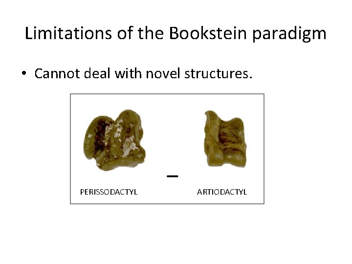 Limitations of the Bookstein paradigm • Cannot deal with novel structures. PERISSODACTYL ARTIODACTYL