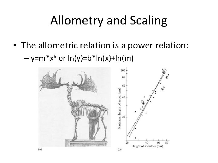 Allometry and Scaling • The allometric relation is a power relation: – y=m*xb or