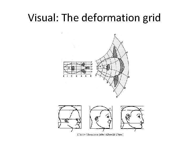 Visual: The deformation grid