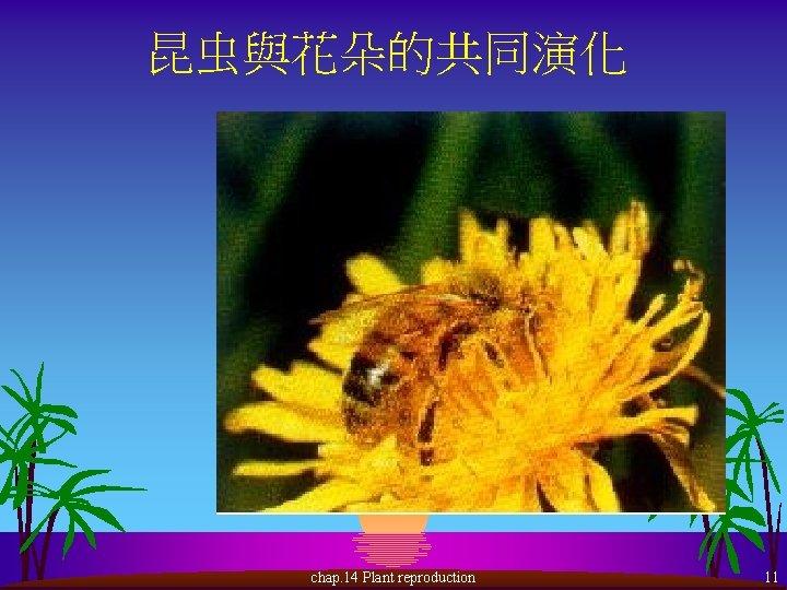昆虫與花朵的共同演化 chap. 14 Plant reproduction 11