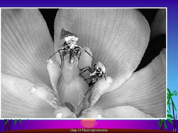 chap. 14 Plant reproduction 12