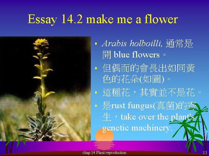 Essay 14. 2 make me a flower s s Arabis holboilli, 通常是 開 blue