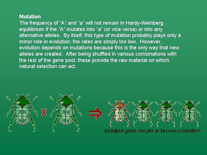 """Mutation The frequency of """"A"""" and """"a"""" will not remain in Hardy-Weinberg equilibrium if"""