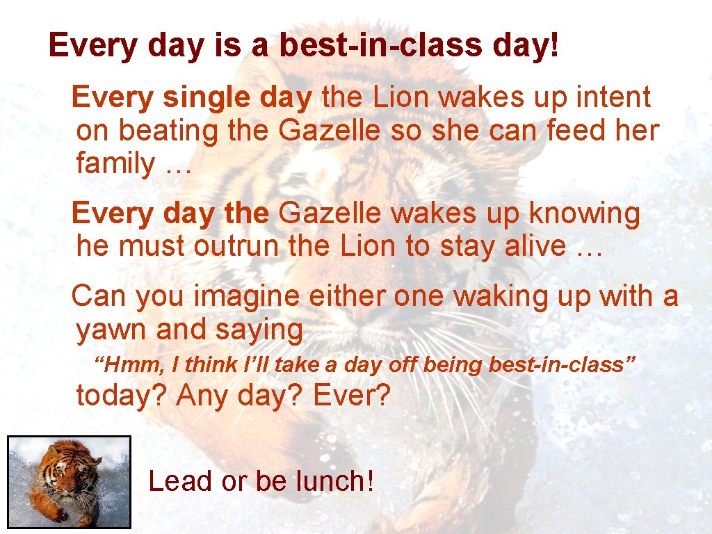 Every day is a best-in-class day! Every single day the Lion wakes up intent