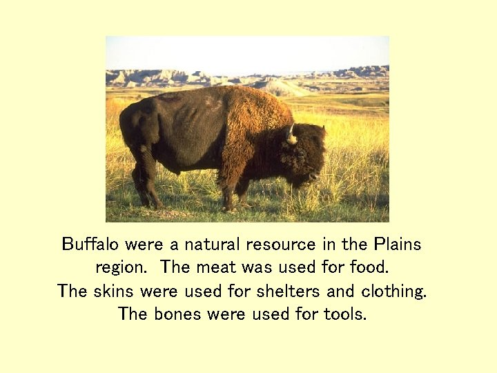 Buffalo were a natural resource in the Plains region. The meat was used for