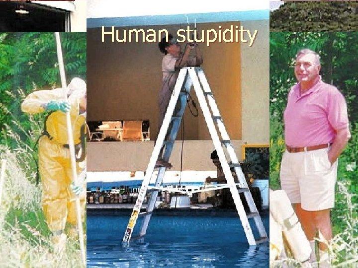 Human stupidity 56