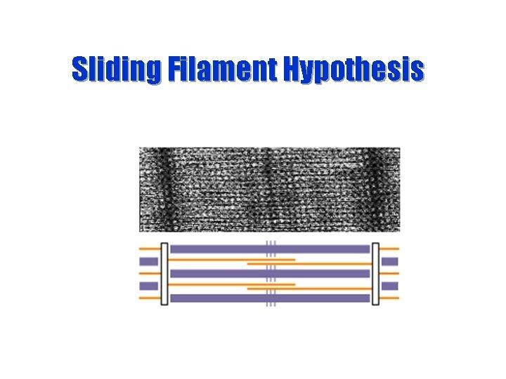 Sliding Filament Hypothesis