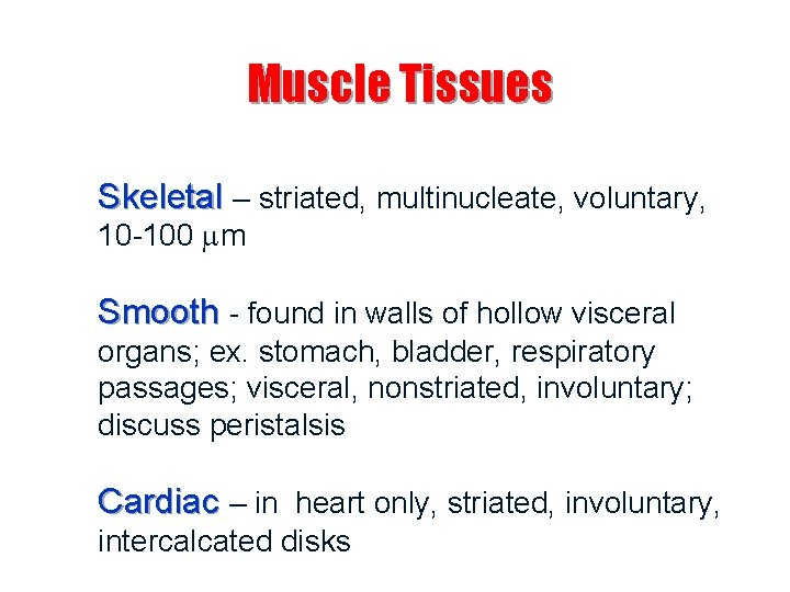 Muscle Tissues Skeletal – striated, multinucleate, voluntary, 10 -100 m Smooth - found in