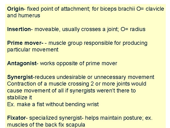 Origin- fixed point of attachment; for biceps brachii O= clavicle and humerus Insertion- moveable,