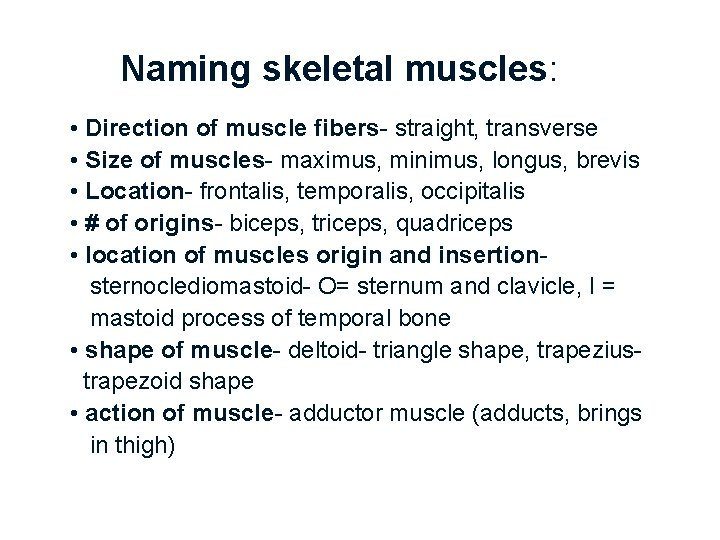 Naming skeletal muscles: • Direction of muscle fibers- straight, transverse • Size of muscles-