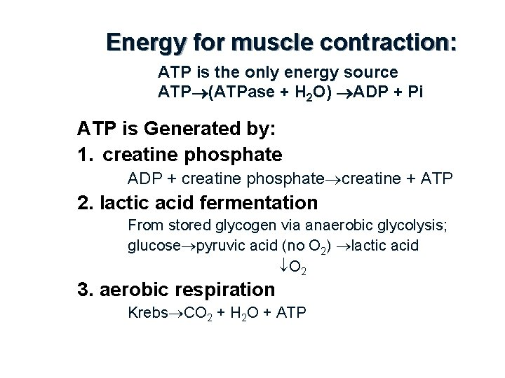Energy for muscle contraction: ATP is the only energy source ATP (ATPase + H