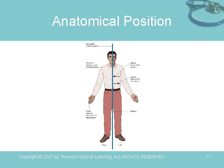 Anatomical Position Copyright © 2007 by Thomson Delmar Learning. ALL RIGHTS RESERVED. 11