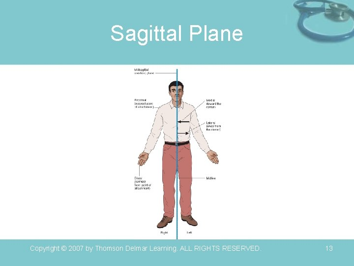 Sagittal Plane Copyright © 2007 by Thomson Delmar Learning. ALL RIGHTS RESERVED. 13