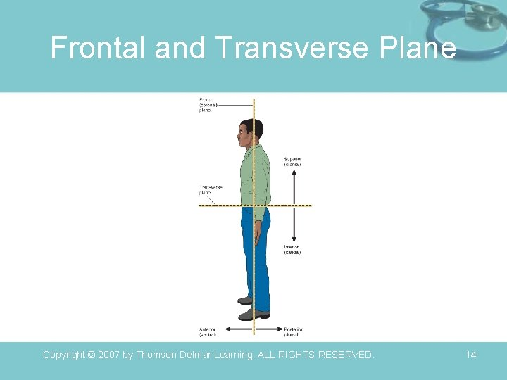 Frontal and Transverse Plane Copyright © 2007 by Thomson Delmar Learning. ALL RIGHTS RESERVED.
