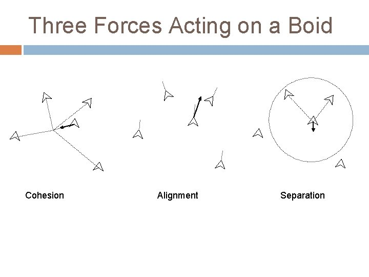 Three Forces Acting on a Boid Cohesion Alignment Separation