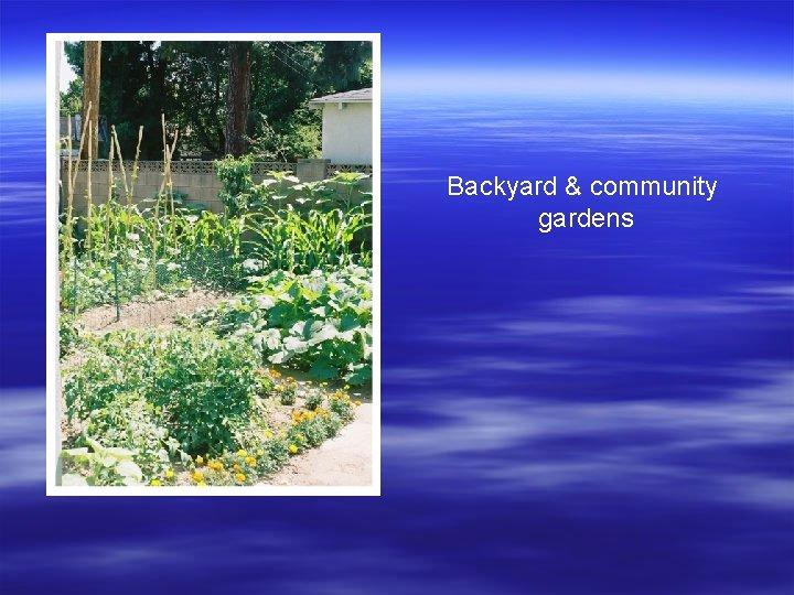 Backyard & community gardens