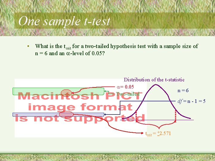 One sample t-test • What is the tcrit for a two-tailed hypothesis test with