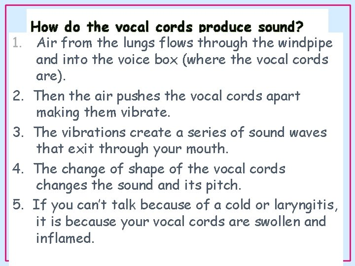 1. 2. 3. 4. 5. How do the vocal cords produce sound? Air from