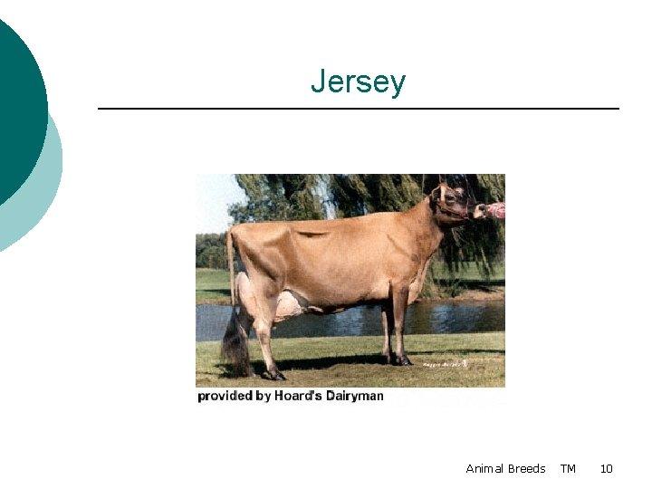 Jersey Animal Breeds TM 10