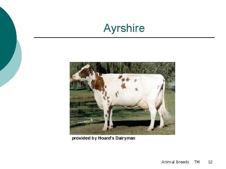 Ayrshire Animal Breeds TM 12