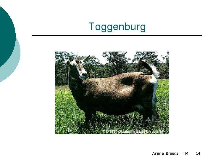 Toggenburg Animal Breeds TM 14