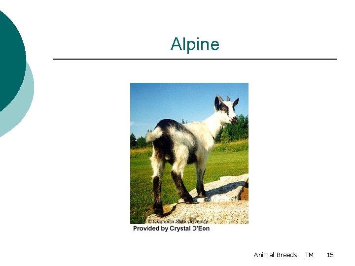 Alpine Animal Breeds TM 15