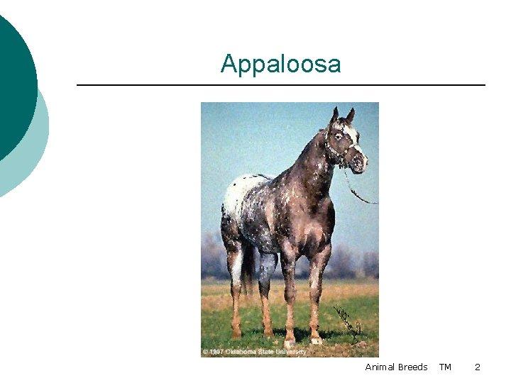 Appaloosa Animal Breeds TM 2