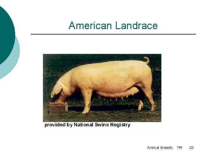 American Landrace Animal Breeds TM 22