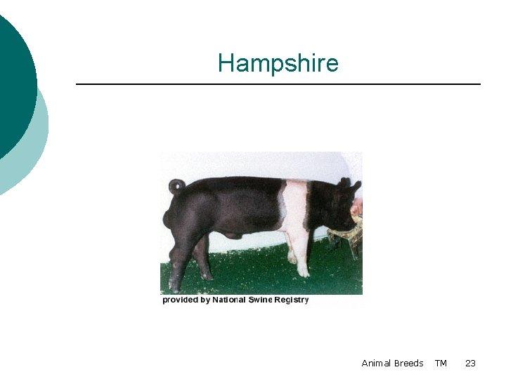 Hampshire Animal Breeds TM 23