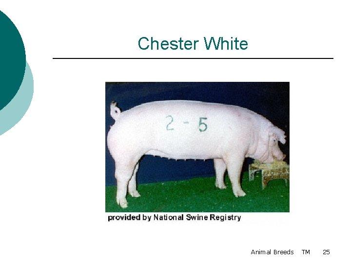 Chester White Animal Breeds TM 25