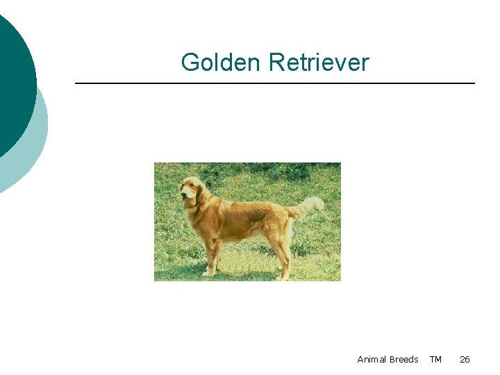 Golden Retriever Animal Breeds TM 26
