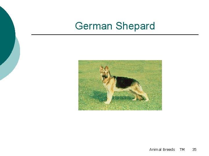 German Shepard Animal Breeds TM 35